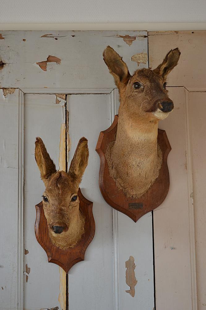 Opgezette hertenkoppen (Mounted deer heads) www.blossombrocante.nl