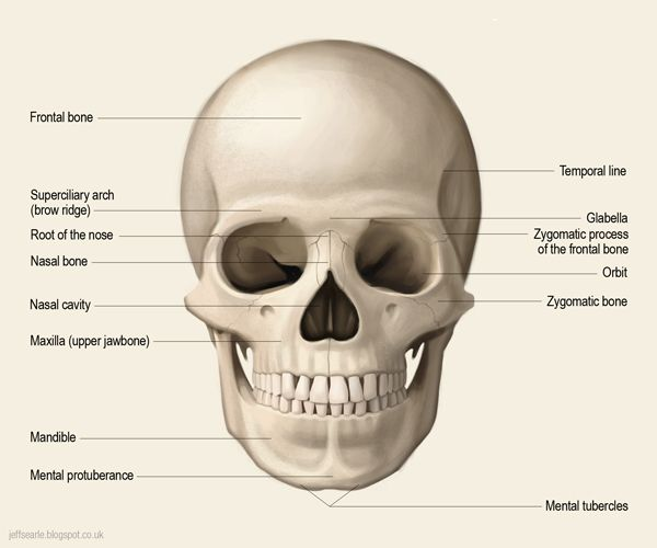 Mejores 76 imágenes de anatomía humana en Pinterest   Anatomía ...
