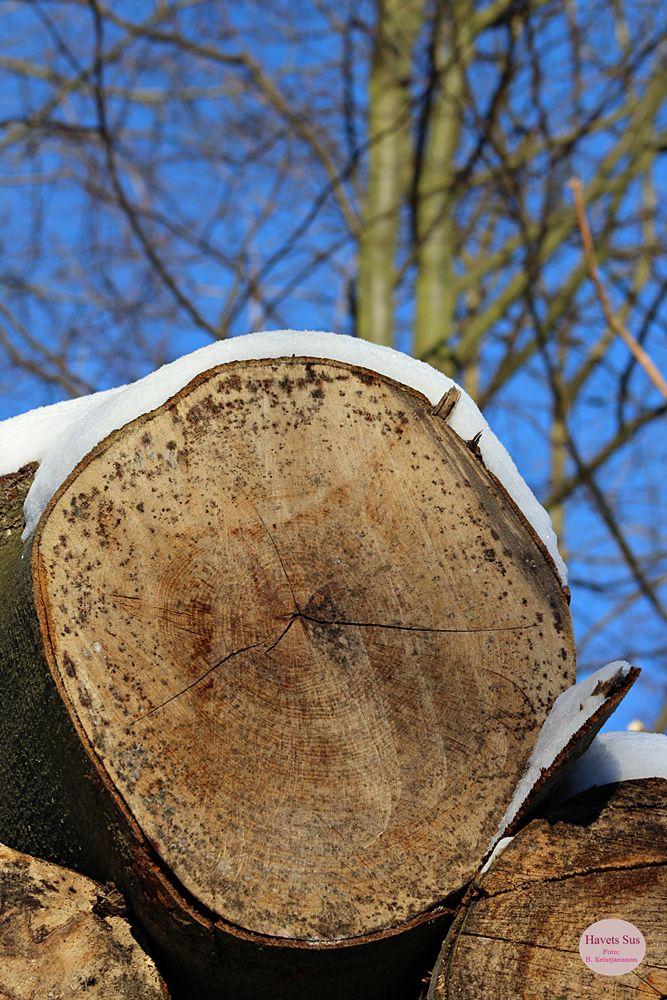 Woods, wood, skoven, winter, vinter, Denmark Danmark, Hundested, Havets Sus, nature, nature, naturephotography, naturephoto