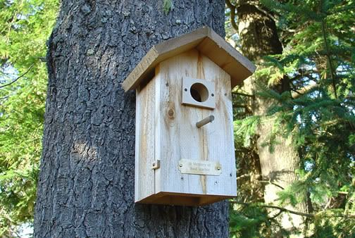 How To Make Your Own Bird House Birdhouses Pinterest