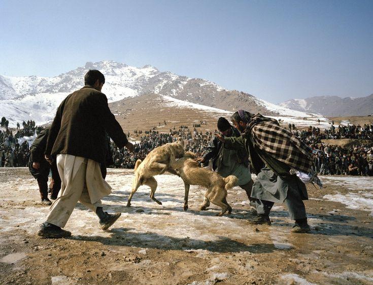 Немецкий фотограф Филипп Энгельхорн путешествовал по Афганистану и снимал главное развлечение местных жителей — собачьи бои