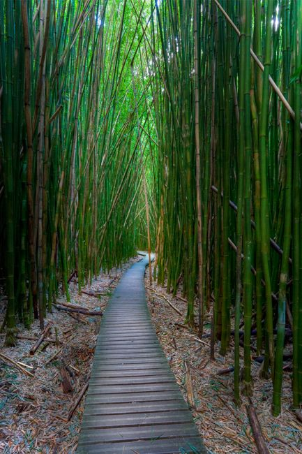 Boardwalks always lead to amazing places :) If and when I go to Maui, I'll be sure to find this bamboo forest!