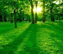the greenery seen by the trees grass sunlight passing through the trees and lookin too beautiful