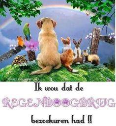 regenboogbrug hond - Google zoeken