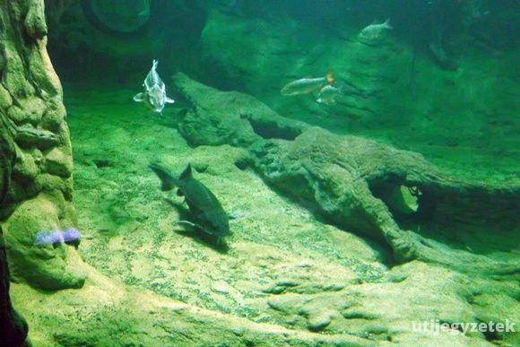 Akvárium a Tisza-tavi Ökocentrumban