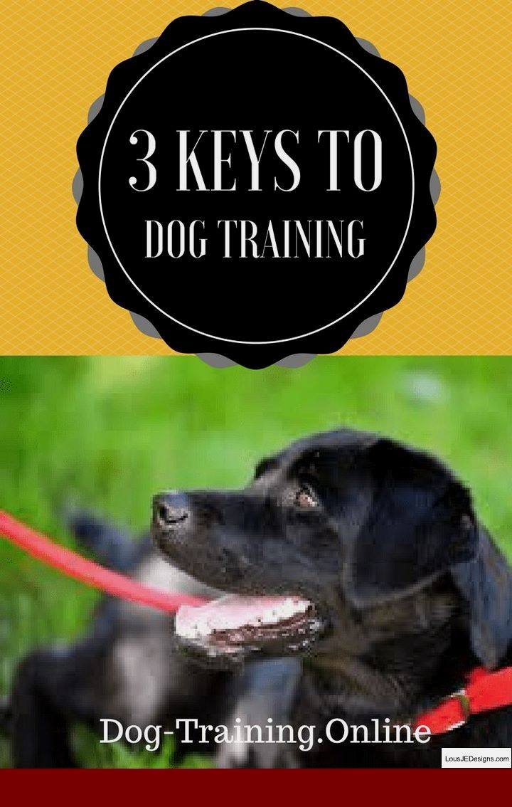 How To Clicker Train A Dog Not To Bark And Pics Of How To Train A