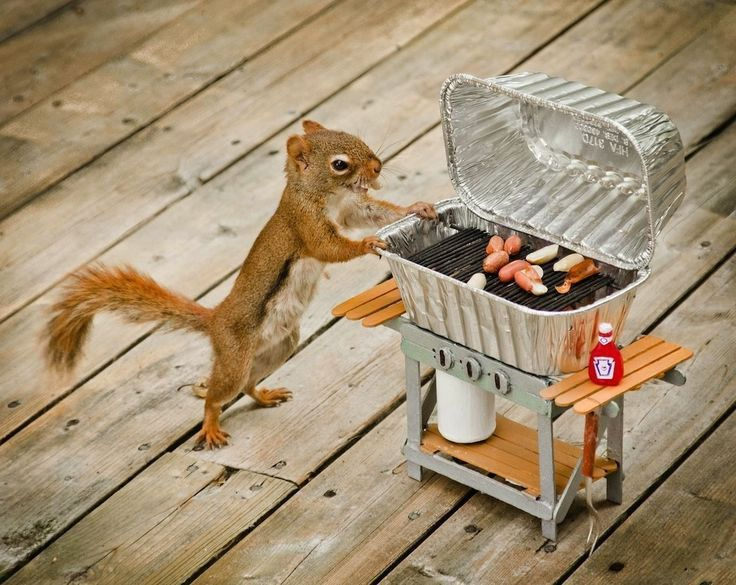 funny squirrel having a barbecue