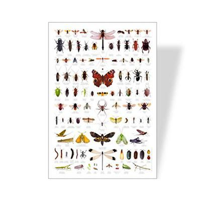 backyard bugs poster learning poster eco friendly poster bug