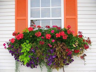 window box geraniums, I want one some day