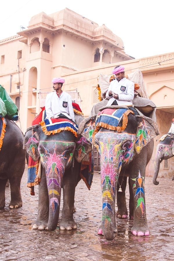 Elephant Rides in the Pink City of Jaipur, India A…