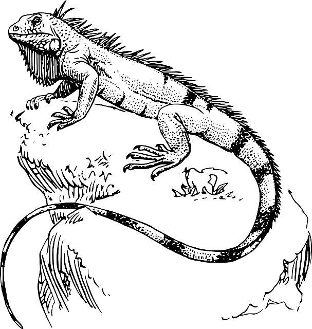 Iguana para pintar