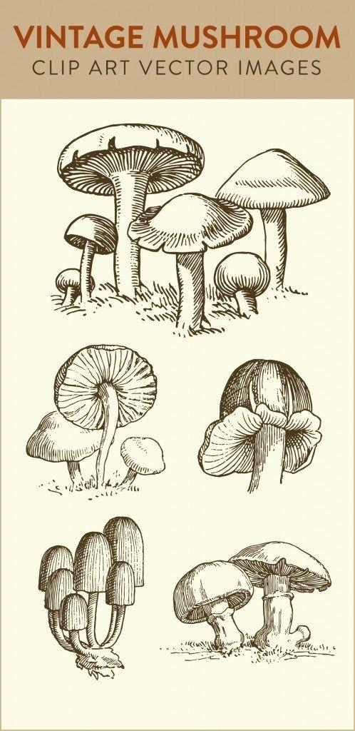 mushroom clip art, vintage mushroom, vector art clipart, royalty free images, download stock images, art vector, free stock images, images royalty free,