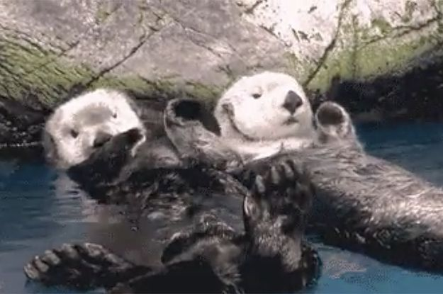 Here's A Bunch Of Otters Holding Hands For Your Friend Who's Having A Bad Day