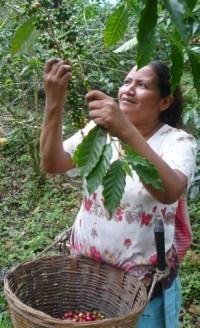 Guatemala, she's picking coffee :) really really good coffee