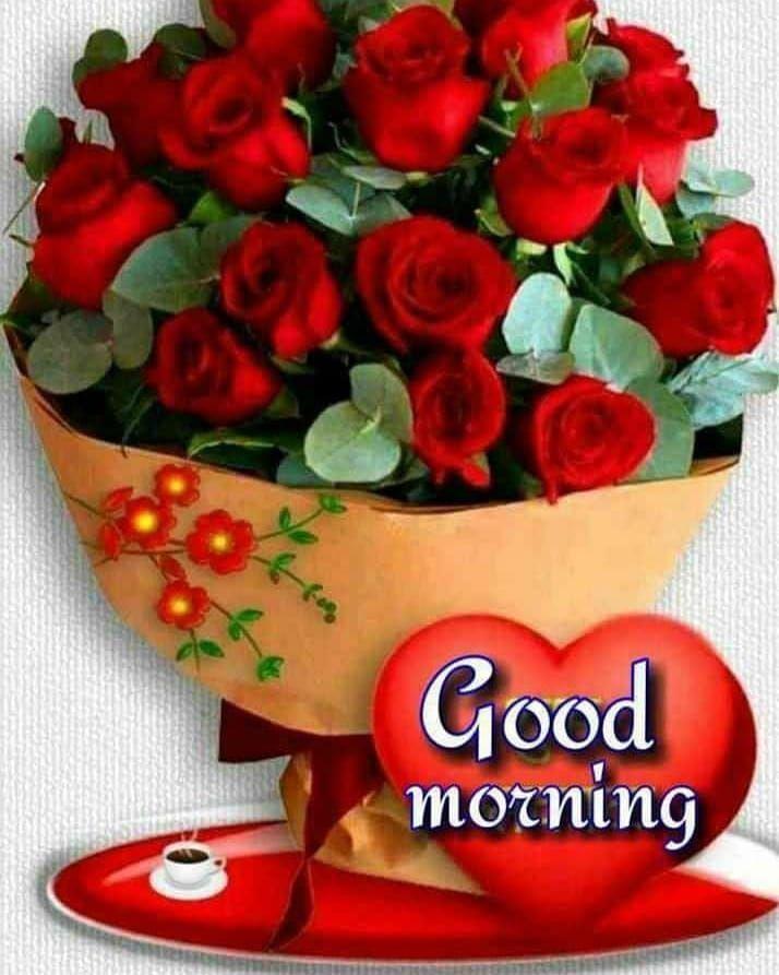 Good Morning Best Images Rose