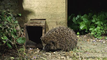 """Give hedgehogs a home.  Downloads on this link for:  """"Create a Mammal Home"""" Pocket Guide.  AND ...  """"Make a Hedgehog Home"""" How to Poster."""