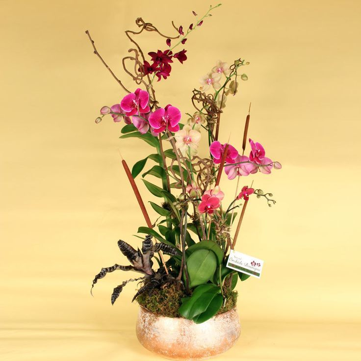 Majestic Fall Orchid Arrangement Orchid Arrangements Orchids Dendrobium Orchids