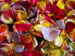 The Herb Gardener: How to Make Rose Liquor