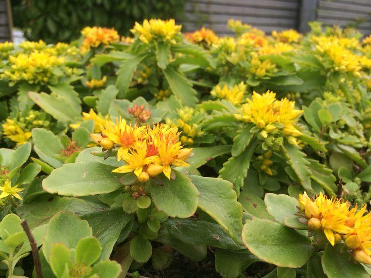 Mikkelinpuistossa voit ihailla myös kasveja http://www.rudus.fi/pihakivet