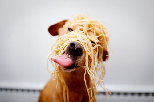 (:Dinner, Mail, Puppies, Funny Dogs, Spaghetti, Noodles, Silly Dogs, Dogs Food, Animal