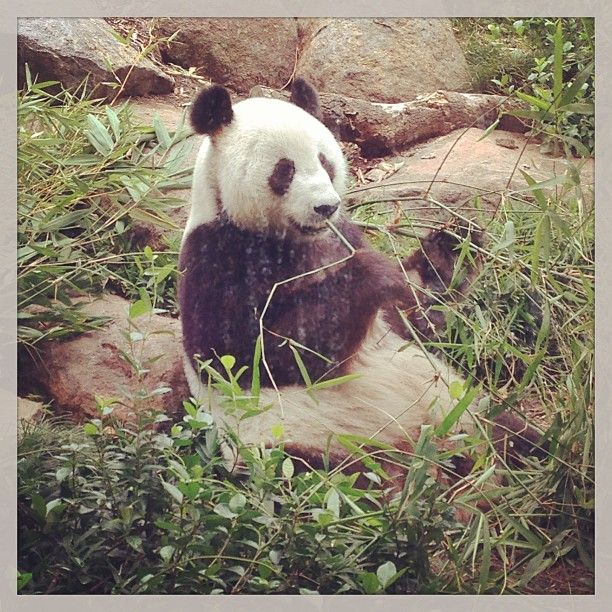 Love animals? Adelaide Zoo is always worth a stop off on any road trip :)