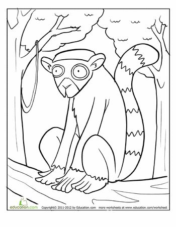 ring tailed lemur coloring page - Wild Kratts Coloring Book