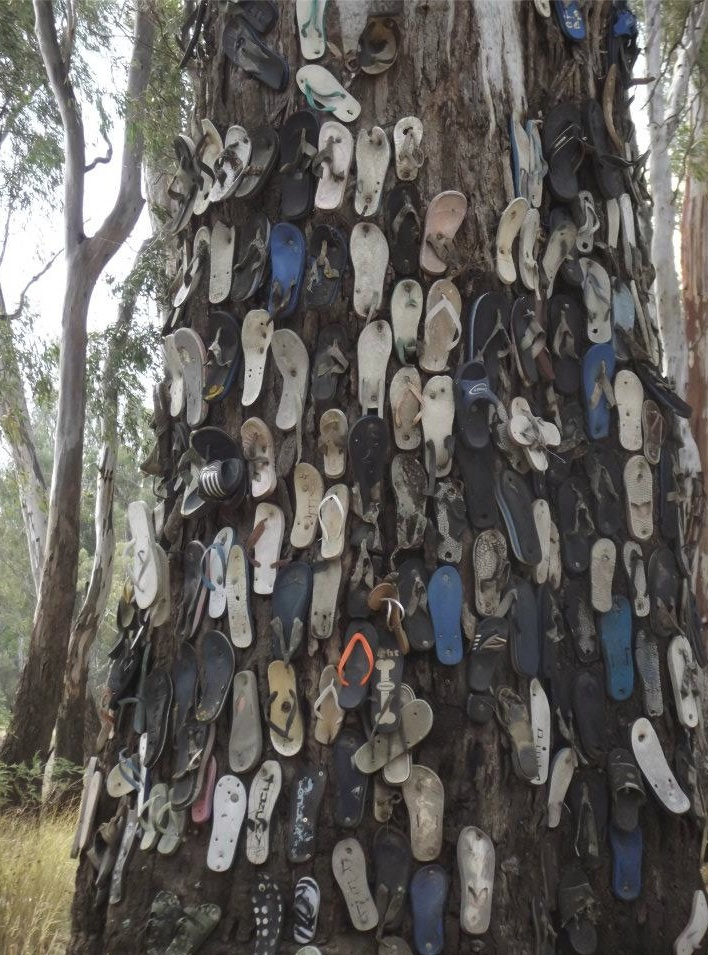 Camping on the Murray River, Barooga NSW...Yep I got a thong ready 4 this tree when we go camping there.