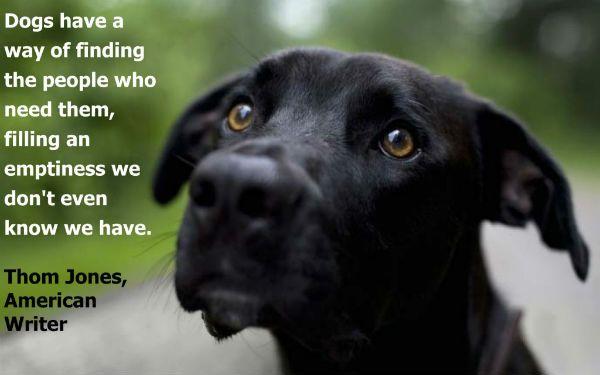 Jara !! Honden zijn grote metgezellen. Ze zijn loyaal,trouw,meelevend,vriendelijk en grote beschermers. Er zijn momenten dat we denken over hun doel in ons leven. Meestal zijn ze tonen ons de meest onvoorwaardelijke en onpartijdige liefde.