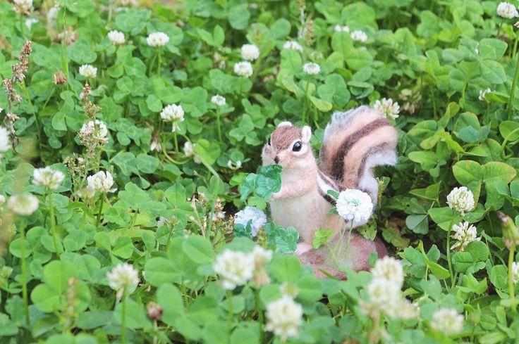** 近所の公園にはこの時期 小さなクローバー畑がちょこちょこできます* まあるいシロツメクサがほんとうに可愛い○ . シマリスさんは四つ葉のクローバーを見つけて ご満悦です🍀 . #シマリス#chipmunk#squeal #羊毛フェルト#woolfelt #シロツメクサ#クローバー#四つ葉のクローバー