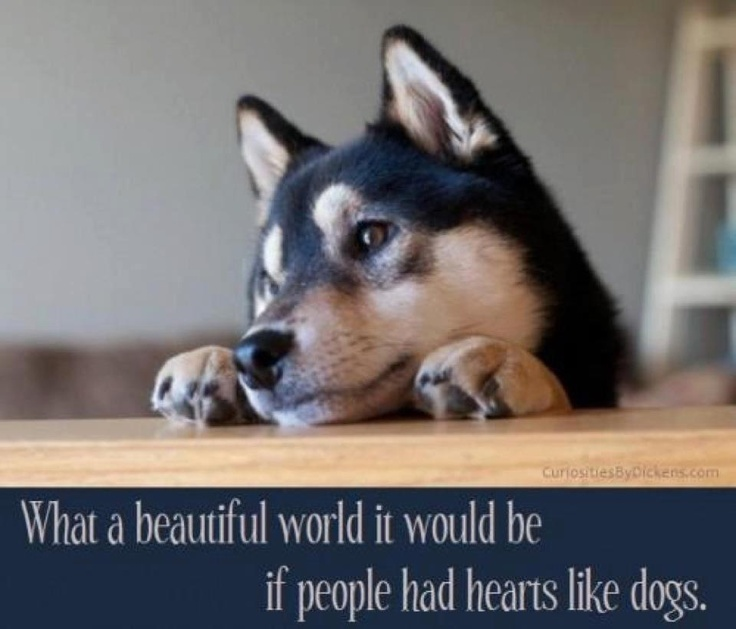 If only !Dogs Quotes, Puppies, Shiba Inu, Wonder World, Pets, So True, Beautiful World, True Stories, Animal