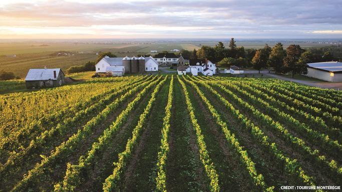 Vignoble Coteau Rougemont