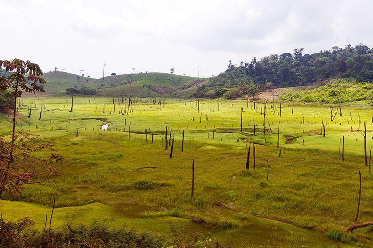 Así es como la deforestación aumenta las sequías en el Amazonas | ELESPECTADOR.COM