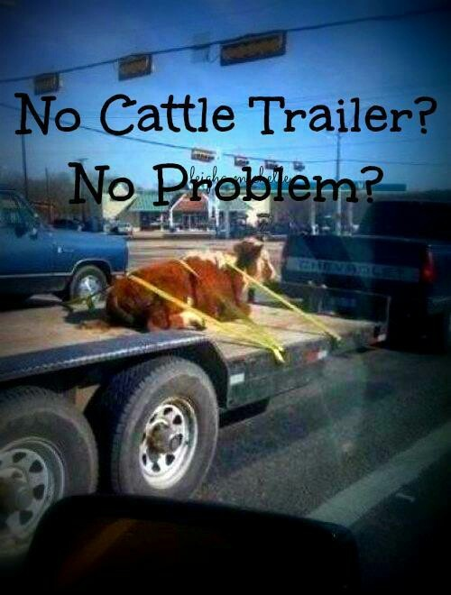 Lol wow I gotta show this to my dad maybe we won't have to use a trailer next time hahaha
