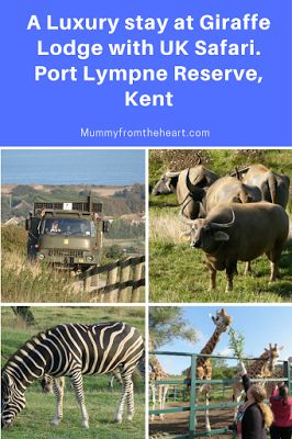 Review: Romantic Break for Two at Giraffe Lodge, Port Lympne Reserve, Kent. You'll feel as if you're on safari in Africa as the animals roam free on the Romney Marshes just outside your balcony. This luxury stay is truly amazing.