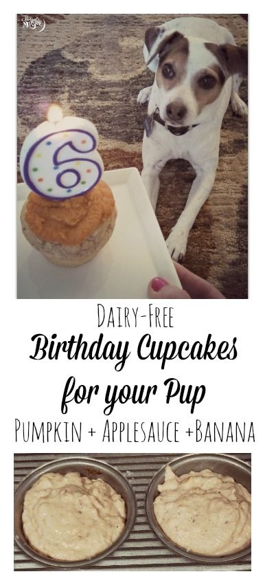 Birthday Cupcakes (PUPCAKES!) for your Dog, with banana, applesauce, and pumpkin! #dairyfree #veganfriendly