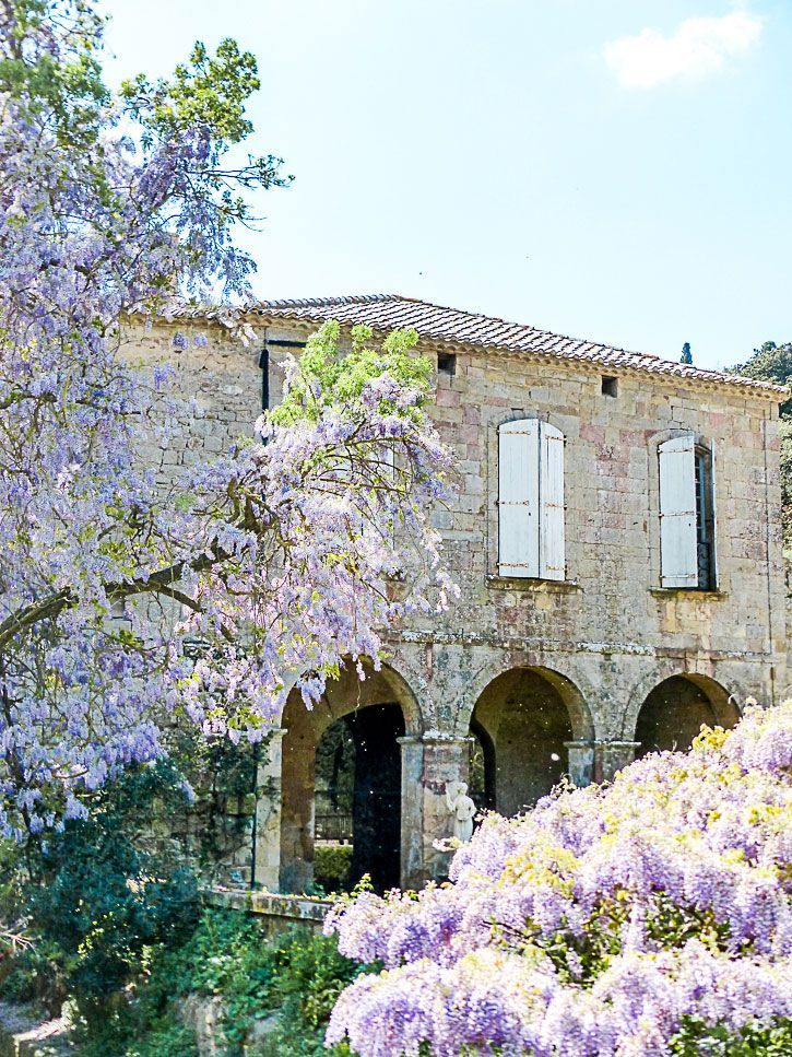 Lilas cour abbaye de Fontfroide