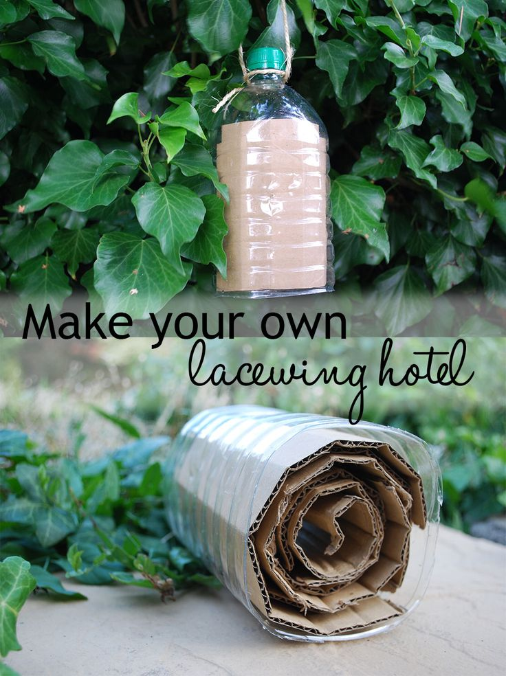 Use a plastic drinks bottle and some corrugated cardboard to make a cute insect hotel for lacewings - they eat aphids for you!