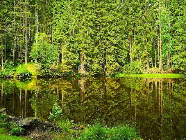 boubinske-jezirko-006.jpg (640×480)