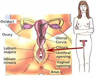 Sexologist Problem : Sexual Arousal Disorder