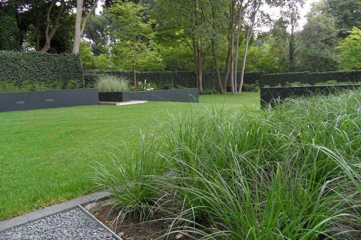 Strakke tuin - Grasveld - Grassen - Moderne tuin - Staal - Hedera schermen - Tuin afscheiding - Grind - Bomen www.hendrikshoveniers.nl