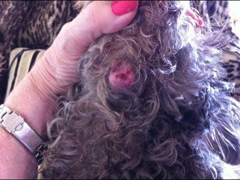 Natural Remedy For Warts On Dogs