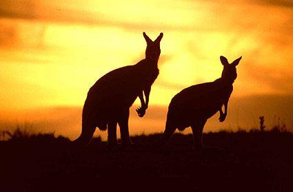 i want to go on an Australian Safari
