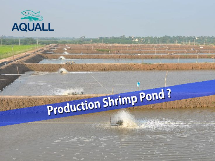Choosing The Finest ‪‎Ponds‬ for your ‪‎aquaculture‬ in