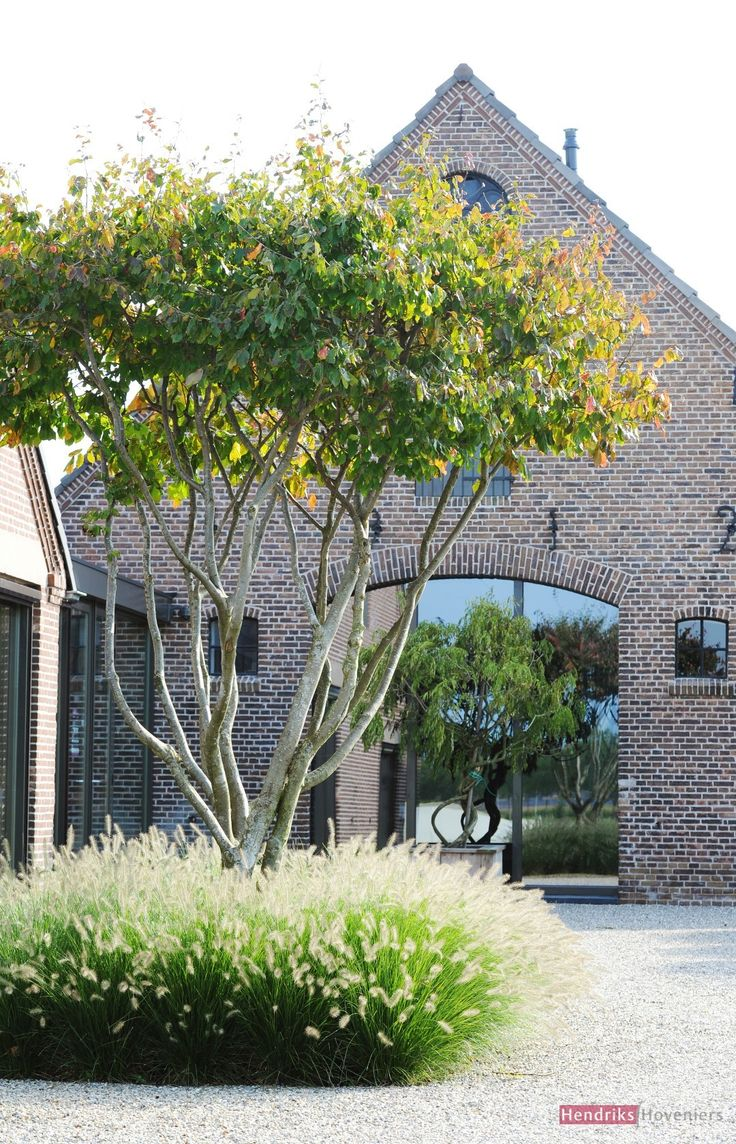 Een zachte onderbeplanting als entree naar de tuin of huis met daarin een mooie karakteristieke meerstammige boom
