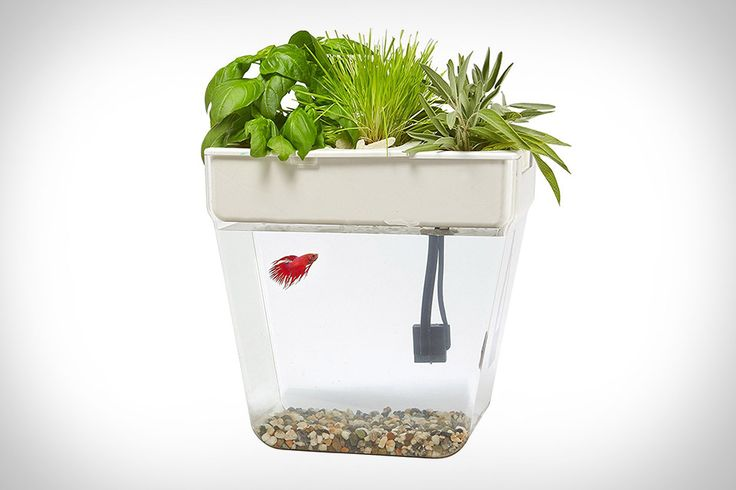No one enjoys cleaning out their fish's tank. With the Water Garden Fish Tank, you'll never have to worry with that again. It leverages aquaponics - a closed-loop system that uses the fish's waste as plant food and the plants...