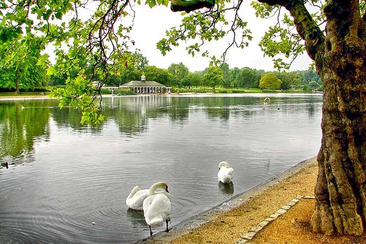 Hyde Park London: One of the Royal Parks of the World #London #Royals #Parklife #beautiful #ilovelondon