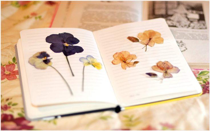 Pressed Flowers In Book Wallpaper | pressed flowers in book wallpaper 1080p, pressed flowers in book wallpaper desktop, pressed flowers in book wallpaper hd, pressed flowers in book wallpaper iphone