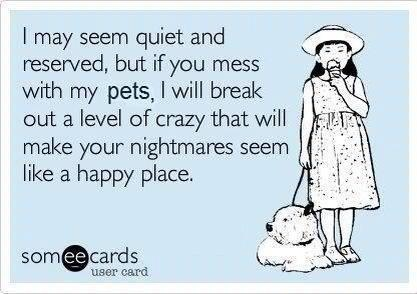 i may seem quiet and reserved, but if you mess with my pets, i will break out a level of crazy that will make your nightmares seem like a happy place.Chit Chat, Breaking Out, Life Chit, Happy Places, So True, Special Places, True Stories