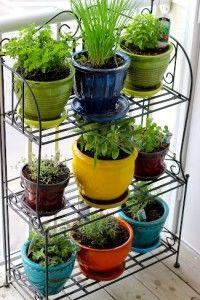 mini kitchen herb garden how to keep the kitchen herb garden alive - Simple Kitchen Herb Garden