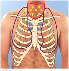 Location of normal breath sounds: Bronchial (hollow higher pitched), Vesicular (low pitched, swishing, short expiratory sound) & BronchoVesicular (med pitched equal inspiration & expiration)